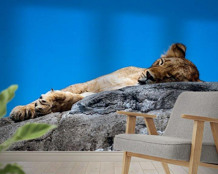 Beispiel fototapete: Schlafendes Löwenjunges von Van Keppel Studios