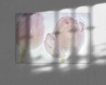 2 tulipes dans de la glace cristalline sur Marc Heiligenstein
