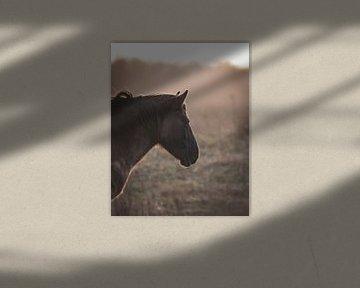 Pferd bei Sonnenuntergang von Sander van Driel