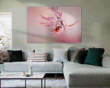 Lieveheersbeestje in roze bokeh van Sander van Driel