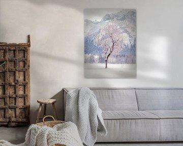 Winterboom van Alexander Dorn