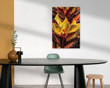 Gouden bladeren van Niels Sinke