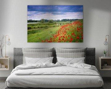 Poppy Colors III von Sander Peters Fotografie