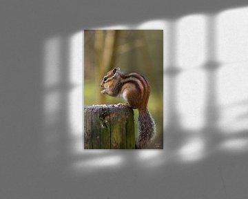 Eichhörnchen (2) von Photo Julleke