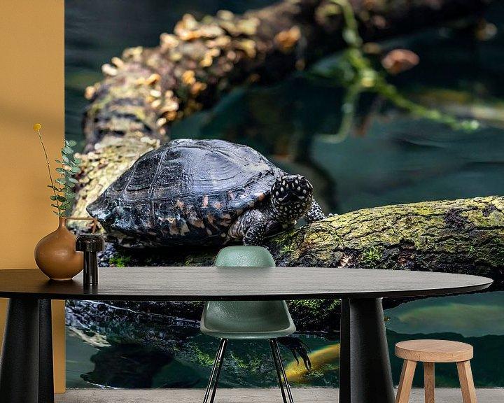 Beispiel fototapete: Schildkröte auf Baumstamm von Van Keppel Studios