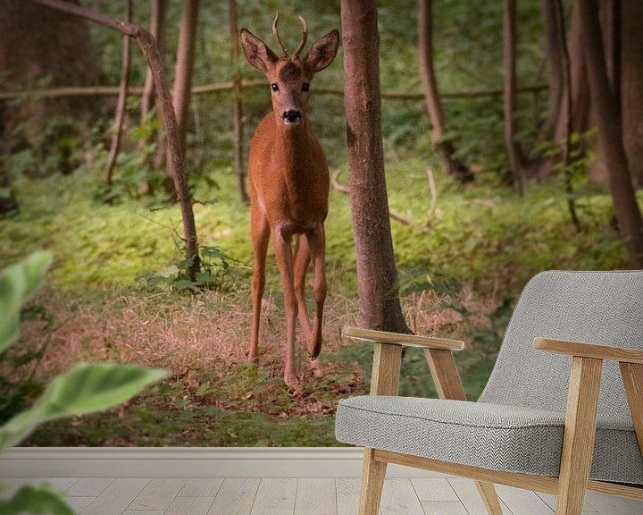Beispiel fototapete: Rehe am frühen Morgen von Photo Julleke