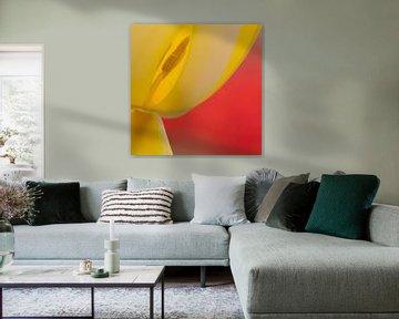 abstracte tulp von Maura Klumper