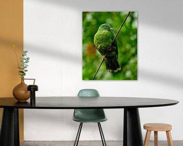 grüne Taube von Van Keppel Studios