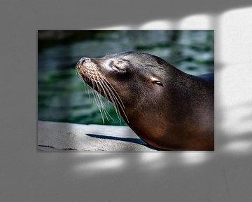 Californische zeeleeuw van Van Keppel Studios
