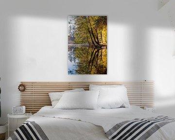 Spiegelung der Bäume von Thomas Heitz