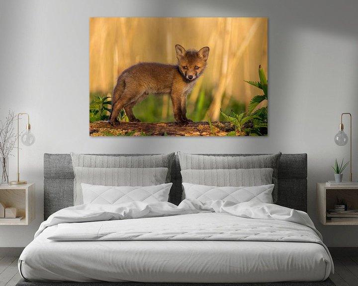 Impression: Un jeune renard le matin sur Fotografie Ronald