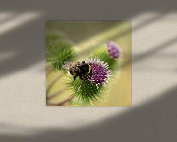 Macro d'une abeille sur un chardon violet