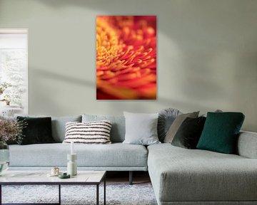 Feuriges Makro einer Gerbera-Blüte von Van Keppel Studios