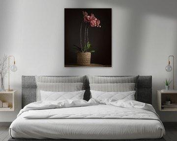 Orchidee van Paul Kaandorp