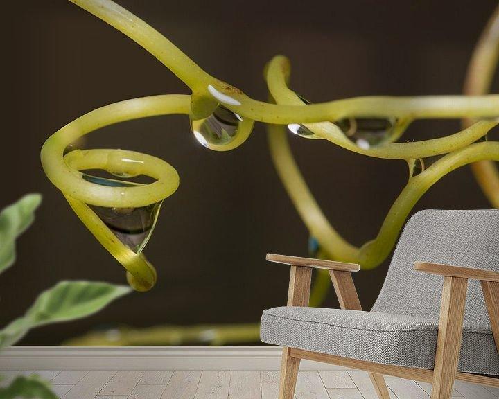 Impression: waterdruppels aan groene druivenranken sur Compuinfoto .