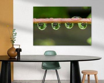 reflectie van druivenblad in waterdruppels