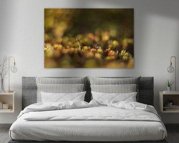 Becher mit Moos, umgeben von einem schönen Hintergrund von Susan van Etten