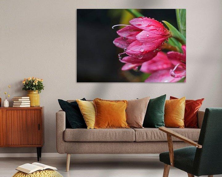 Sfeerimpressie: waterdruppels op roze bloemen van Compuinfoto .
