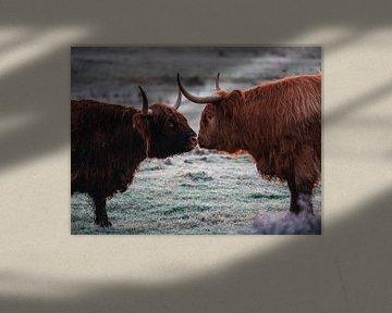 Liebe zwischen schottischen Highlanders von Joren van den Bos