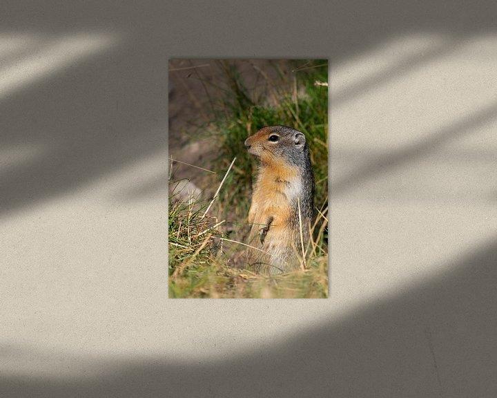 Beispiel: Erdhörnchen (Urocitellus columbianus), Waterton Lakes National Park, Alberta, Kanada von Alexander Ludwig