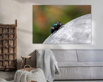 macro van een vlieg von Compuinfoto .