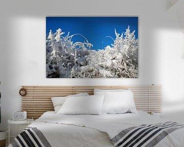 Paysage d'hiver sur BVpix