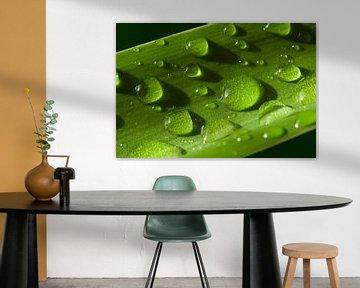 waterdruppels op groen blad van Compuinfoto .