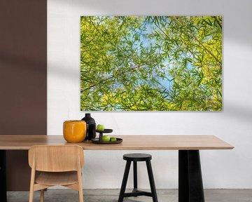 grüner Bambus von Susanne Bauernfeind
