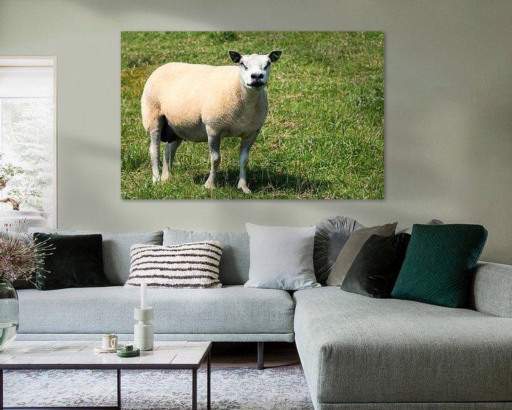 Beispiel: een schaap von Compuinfoto .