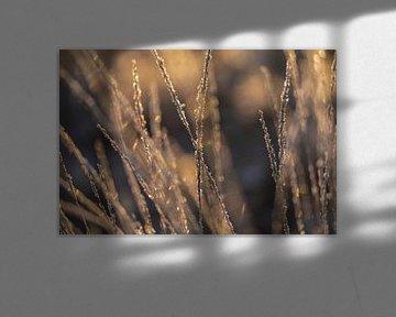 Bevroren gras in de ochtend zon van KB Design & Photography (Karen Brouwer)
