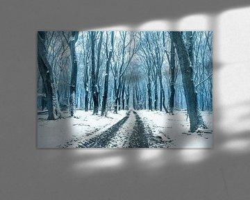 Speulderbos [Winterkoud]