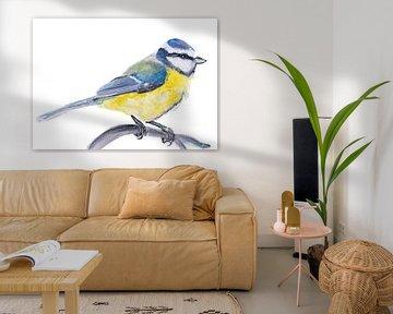 die Blaumeise, Vogelillustration von Angela Peters