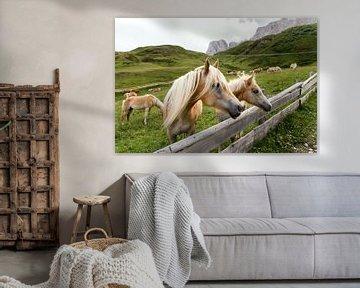 Haflinger in den Bergen von Martina Weidner
