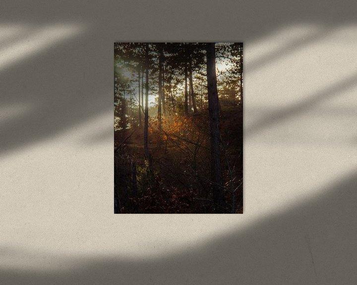 Beispiel: Gegenlicht auf den Blättern von Martijn Tilroe