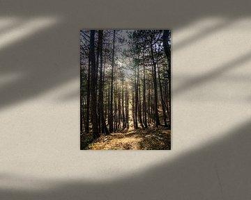 Gegenlicht auf den Bäumen