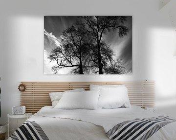 Des arbres en noir et blanc sur un fond dramatique