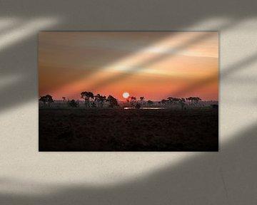 Sonnenaufgang in der Kalmthoutse-Heide von Inez VAN DE WEYER