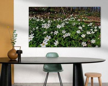 Blühende Wildblumen (Buschwindröschen) in einem Wald im Kaiserstuhl von Timon Schneider