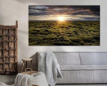 Mooslandschaft von Thomas Heitz