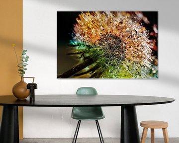 Paardenbloem met druppels en vele kleuren van Digital Design
