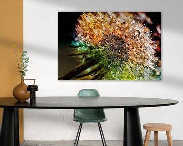 Löwenzahn mit Tropfen und vielen Farben von Digital Design