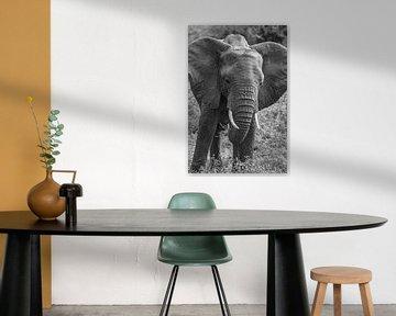 Elefant Afrika schwarz weiß von Erwin Floor