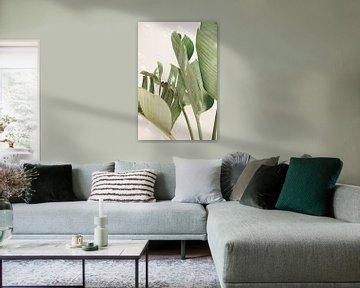 Strelitzia Nicolai in zonlicht - Kleur van Photo Atelier