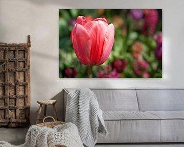 Roze Tulp von Annemieke Storm
