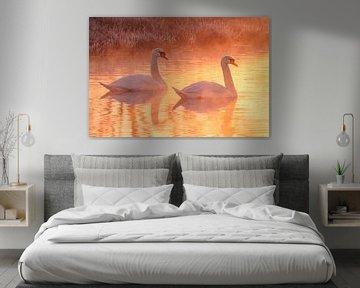 Schwäne in einem goldenen Sonnenaufgang von Arnoud van der Aart