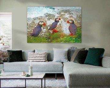 Papegaaiduikers op Papey, IJsland