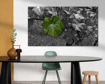Zwart-witfoto van een wijnstok met een enkel gekleurd groen blad van Timon Schneider