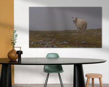 Einsames Schaf im Nebel von Timon Schneider
