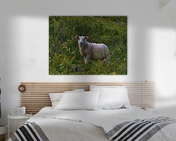 Einzelnes weißes Schaf in grüner Vegetation von Timon Schneider