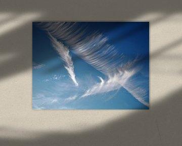 Wings in the sky van Loes
